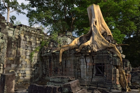 Tree on the ruins of Prah Khan Temple - Angkor, Cambodia Stock Photo - 13659918