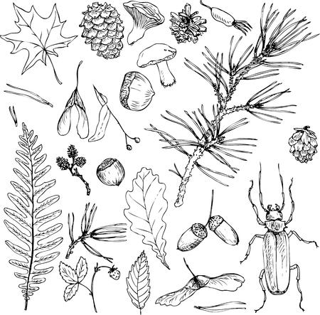 インク描画のフォレスト オブジェクト、種子、葉、小枝、松ぼっくり、手描きのベクトル図の大きなセット