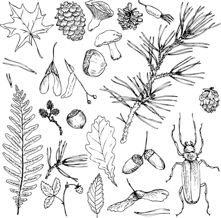 big set of ink drawing forest objects, seeds, leaves, twigs, pine cones, hand drawn vector illustration