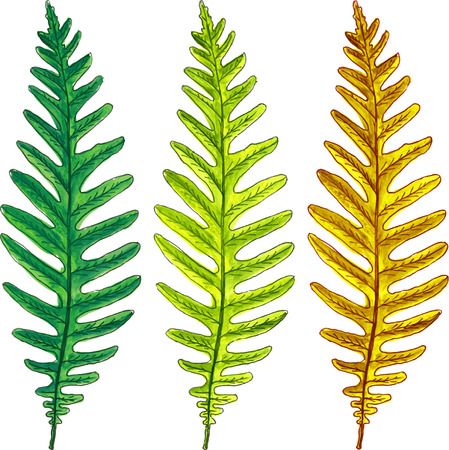 brake fern: summer and autumn fern leaves drawing by watercolor, hand drawn vector elements