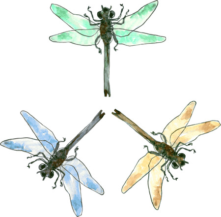 dragonfly wings: three isolated vector dragonflies in different colors drawing by watercolor,green dragonfly,blue dragonfly and golden dragonfly, hand drawn vector illustration Illustration