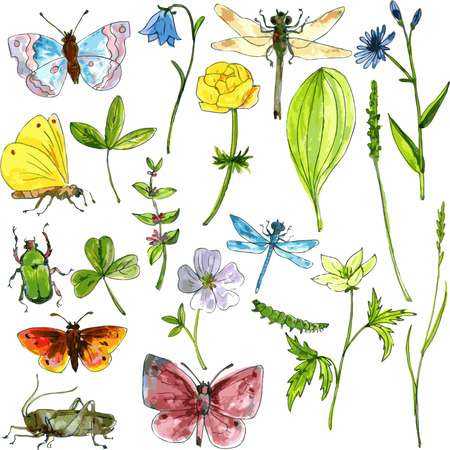 big set of ink drawing meadow objects, plants, flowers, grass, insects, drawing by watercolor hand drawn vector illustration Vettoriali