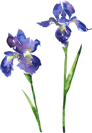 two vector watercolor blue flowers of irises, hand drawn vector design elements Vettoriali