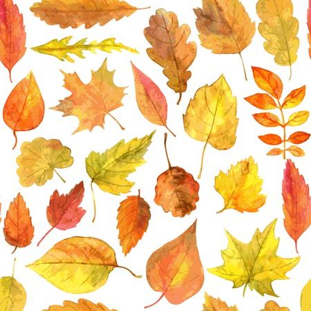 red oak tree: vector seamless pattern with autumn leaves drawing by watercolor, hand drawn vector elements