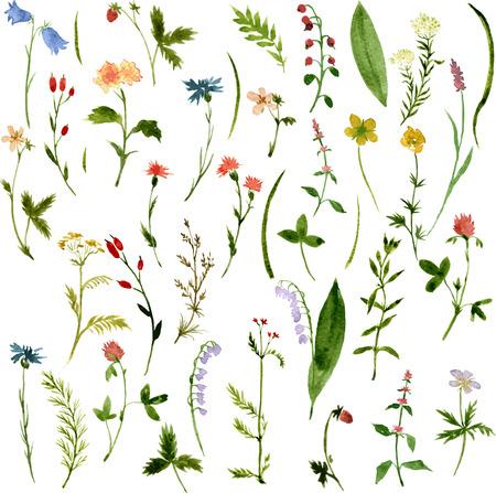 herbs: Conjunto de hierbas y flores de dibujo acuarela, ilustración vectorial
