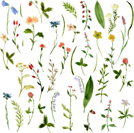flower meadow: Set of watercolor drawing herbs and flowers, vector illustration