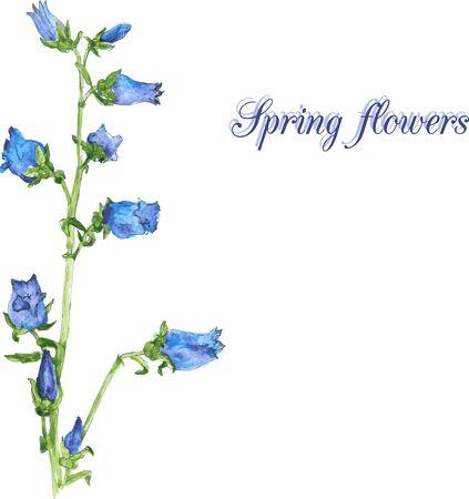 campanula: watercolor floral card with campanula, hand drawn vector illustration Illustration