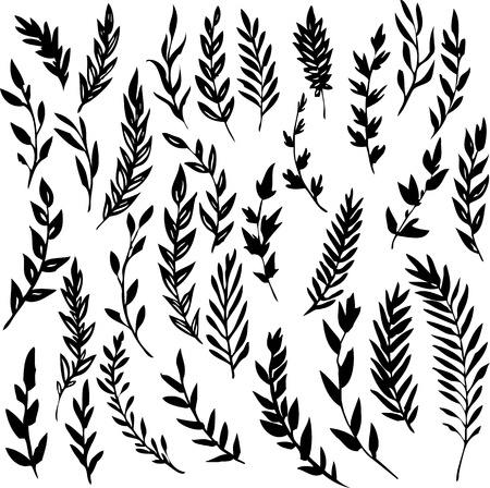 plant design: set of black silhouettes from abstract branches with leaves, hand drawn vector elements