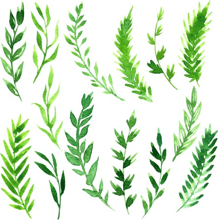 set of abstract branches with green leaves drawing by watercolor, hand drawn vector elements Vectores