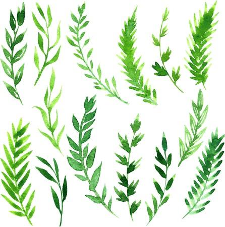 helechos: conjunto de ramas con hojas verdes abstractos dibujo de acuarela, elementos del vector dibujado a mano