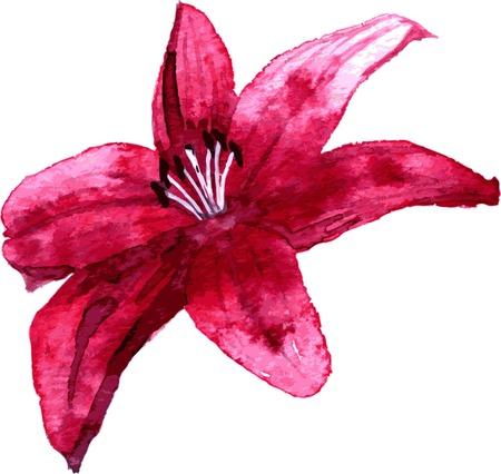 Lys rouge dessin de fleurs par l'aquarelle, tiré par la main illustration vectorielle Vecteurs