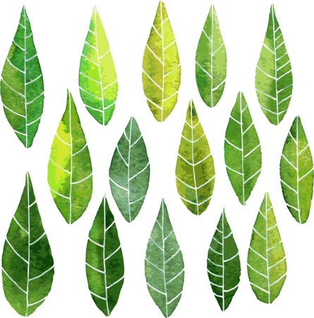 streaks: set of abstract green leaves with streaks drawing by watercolor, hand drawn vector elements Illustration