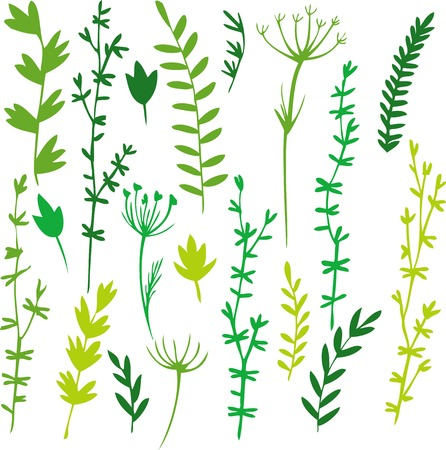 set of doodle leaves and grass, hand drawn vector illustration Illustration