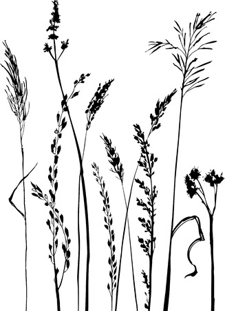 Silhouettes of flowers and grass, hand drawn vector illustration  イラスト・ベクター素材