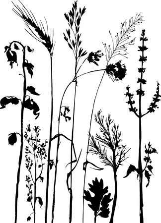 corn flower: Silhouettes of flowers and grass, hand drawn vector illustration Illustration