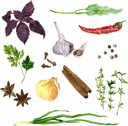 vector set of green stuff, spices and vegetables drawing by watercolor at white background, hand drawn vector illustration