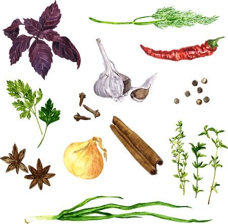 epices: ensemble de vecteur de trucs verts, �pices et l�gumes dessin de l'aquarelle � fond blanc, tir� par la main illustration vectorielle