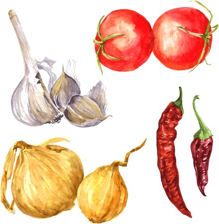 cebolla: Vector conjunto de cebollas dibujo acuarela, elementos de diseño gráfico de la acuarela, dibujado a mano ilustración vectorial
