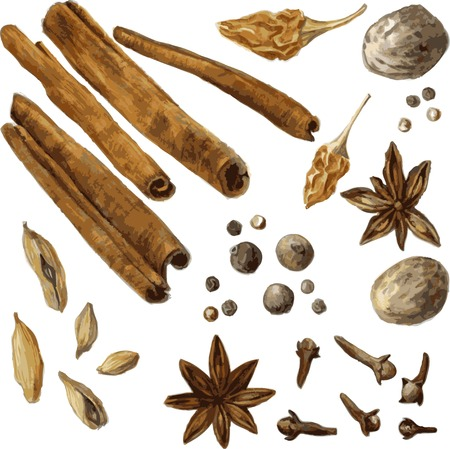 indian spices: set of spice, drawing by watercolor, hand drawn vector illustration