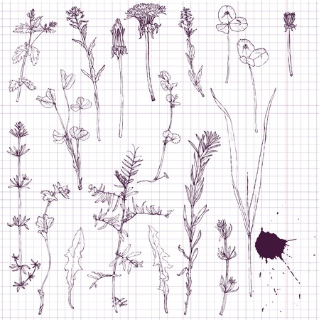 set of line drawing flowers and grass, vector illustration Illusztráció