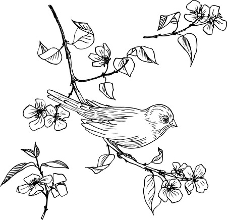 linear drawing bird at branch with flowers and leaves, set of hand drawn design element Illustration