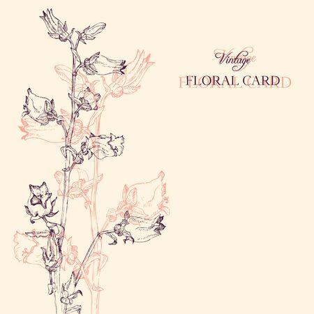 campanula: vintage floral card with campanula, hand drawn vector illustration