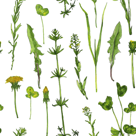 Vector seamless pattern with watercolor drawing herbs and wild flowers