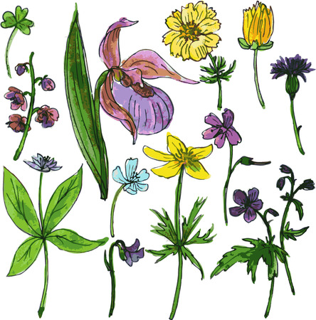 botanica: Set of watercolor drawing herbs and flowers, vector illustration