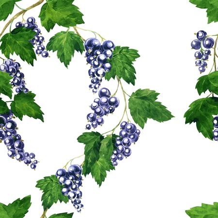 currants: vector seamless pattern with branches of black currants drawing by watercolor, hand drawn vector elements