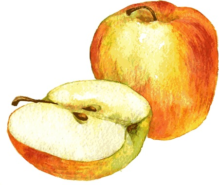 half apple: whole apple and half apple drawing by watercolor, hand drawn vector illustration