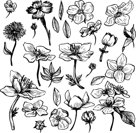 flower sketch: vintage vector floral set of flowers, hand drawn design elements Illustration