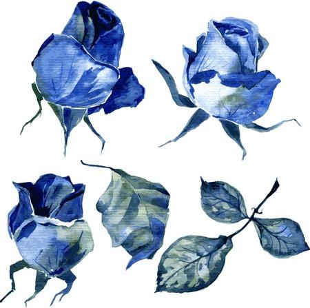 vector set van aquarel tekening blauwe rozen, hand getrokken ontwerp element