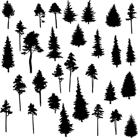 conifers: set of set of conifer trees, vector illustration
