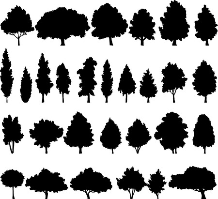 cypress: set of different deciduous trees, vector illustration