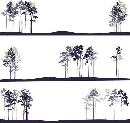 a cedar: conjunto de diferentes paisajes de pinos, dibujado a mano ilustración vectorial Vectores