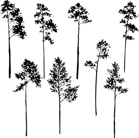 set of pine trees, silhouettes of trees,hand drawn vector illustration Vettoriali