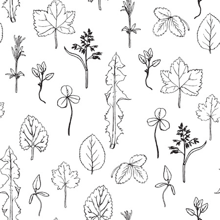 botanica: Seamless pattern with hand drawing herbs and leaves,  hand drawn vector floral background