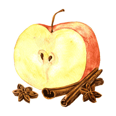 apple cinnamon: Half of red apple,cinnamon sticks and anise seeds drawing by watercolor at white background, hand drawn vector illustration