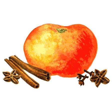 clous de girofle: orange, clous de girofle, les b�tons de cannelle et d'anis dessin de l'aquarelle � fond blanc, dessin� � la main illustration vectorielle