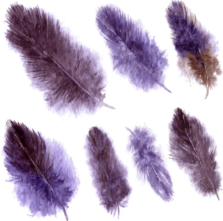plumes: set of purple fluffy plumes, watercolor drawing feathers at white background, hand drawn vector illustration
