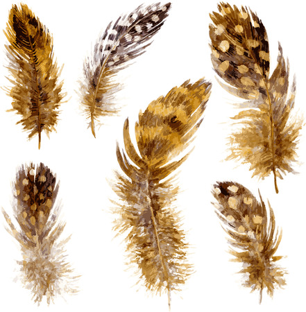 set of mottled brown plumes, watercolor drawing feathers at white background, hand drawn vector illustration
