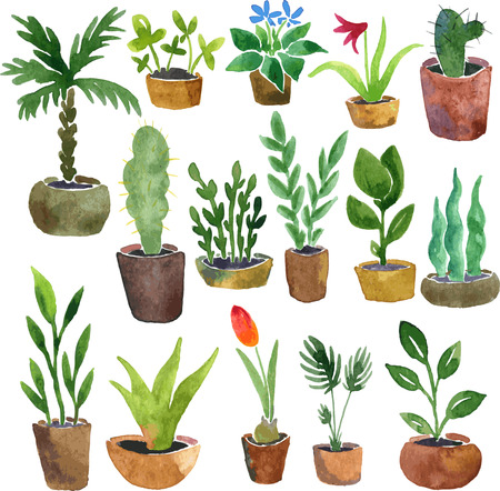 plants growing: watercolor drawing home plants, hand drawn vector illustration