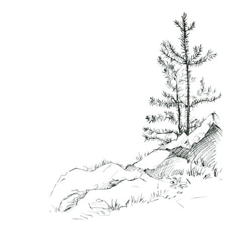 young pine trees and rocks drawing by pencil, sketch of wild nature, forest sketch, hand drawn vector illustration