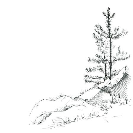 sfondo giungla: giovani pini e rocce di disegno a matita, schizzo di natura selvaggia, foresta schizzo, disegnato a mano illustrazione vettoriale
