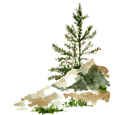 young pine trees and rocks drawing by watercolor, aquarelle sketch of wild nature, painting forest, hand drawn vector illustration