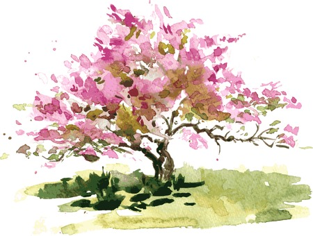 peach tree: cherry blossom tree drawing by watercolor, aquarelle sketch of blooming apple tree, painting garden, hand drawn vector art background