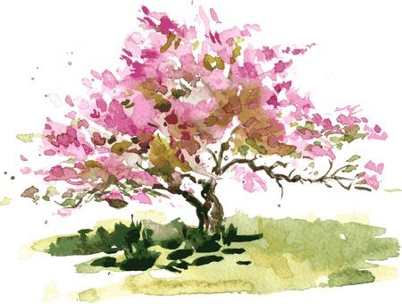 flor de durazno: flor de cerezo dibujo del árbol por la acuarela, dibujo acuarela de la floración del manzano, pintando jardín, dibujado a mano del arte del vector de fondo