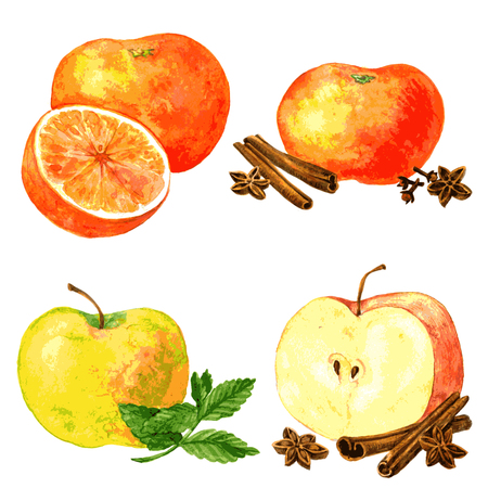 cinnamon sticks: vector set of different fruits and spices, four food composition painting by watercolor, apples and oranges and cinnamon sticks, anise seeds and mint leaves, drawing by aquarelle at white background