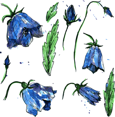 campanula: set of blue bellflowers, drawn by watercolor, isolated blue flowers, buds and leaves of campanula, hand drawn floral design elements