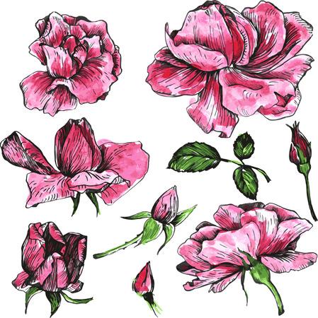 bloemen van roze rozen, getrokken door aquarel, geïsoleerde roze rozen bloemen, knoppen en bladeren, met de hand getekende ontwerp elementen